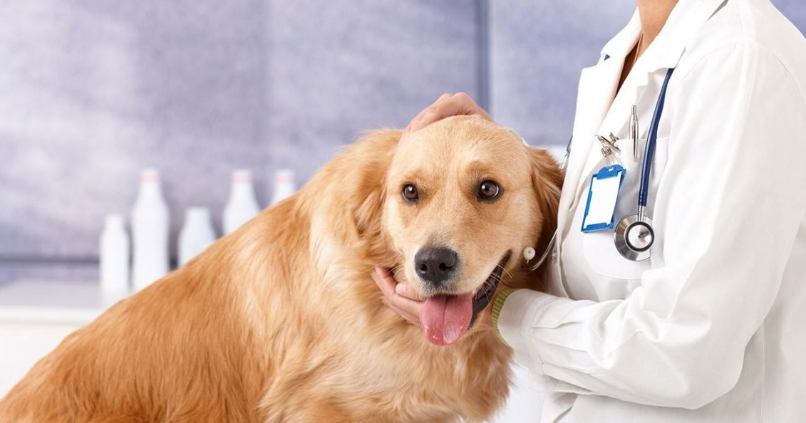 Why Study Veterinary Course Abroad?